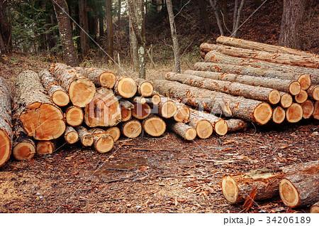 林業 34206189
