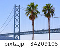 明石海峡大橋 椰子 椰子の木の写真 34209105
