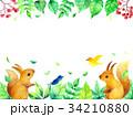 リスと葉っぱのフレーム 34210880