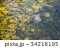 池 溜池 かめの写真 34216195