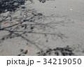 落ち葉と木の影 34219050