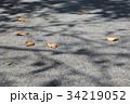 落ち葉と木の影 34219052