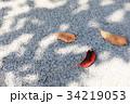 落ち葉と木の影 34219053