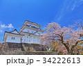 小田原城 天守閣 桜の写真 34222613