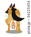 犬を威嚇する猫 34225454