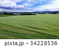 広大な麦畑01 34228536