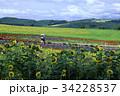 お花畑のデート 34228537