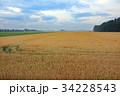 広大な麦畑01 34228543