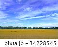 広大な麦畑02 34228545