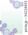 菊はがき05 34228955