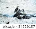 犬吠崎 波 荒波の写真 34229157