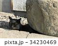 猫 岩 黒猫の写真 34230469