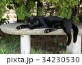 猫 野良猫 黒猫の写真 34230530