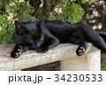 猫 野良猫 黒猫の写真 34230533