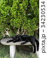 猫 野良猫 黒猫の写真 34230534