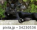 ボス猫の雰囲気がある黒猫 34230536
