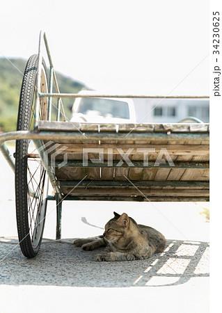 二輪荷台の下に隠れる猫の写真素材 [34230625] - PIXTA