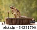 squirrel with saxophone in mouth 34231790