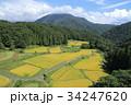 棚田 秋 谷間の写真 34247620