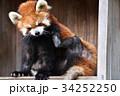 動物園 レッサーパンダ ズーラシアの写真 34252250