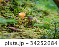 森のキノコ 34252684
