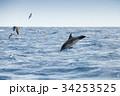 いるか イルカ 海の写真 34253525
