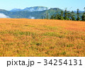 尾瀬 草紅葉 アヤメ平の写真 34254131
