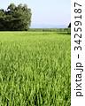 稲作 34259187