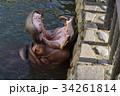 かば 動物園 34261814