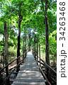 マナウス 自然 遊歩道の写真 34263468