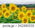 夏 花 フラワーの写真 34266350