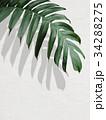 葉 植物 背景のイラスト 34288275