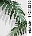 葉 植物 背景のイラスト 34288280