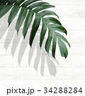 葉 植物 背景のイラスト 34288284