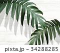 葉 植物 背景のイラスト 34288285