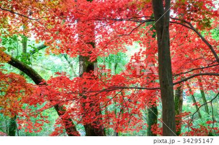 紅葉の季節 34295147