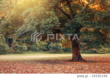 冬の庭園 34295148