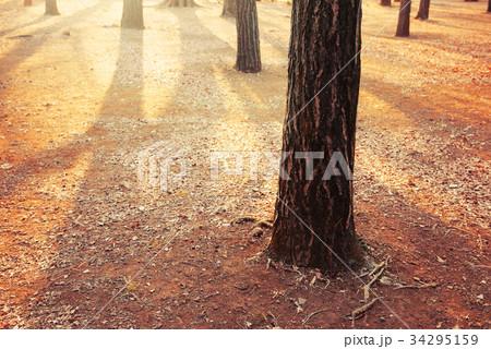 冬の公園 34295159