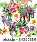 動物 エキゾチック エキゾティックのイラスト 34300836