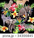 動物 エキゾチック エキゾティックのイラスト 34300845