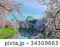 千鳥ヶ淵 桜 春の写真 34309663