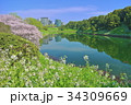 半蔵濠桜 34309669
