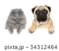 Cat and dog above banner 34312464
