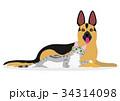 仲良く横になる犬と猫 34314098