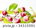 実 果実 椿の写真 34315091