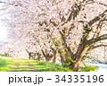 美しい桜並木 34335196