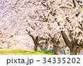 美しい桜並木 34335202