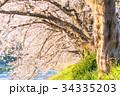桜 花 春の写真 34335203