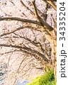 桜 花 春の写真 34335204