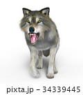 狼 イヌ科 動物のイラスト 34339445